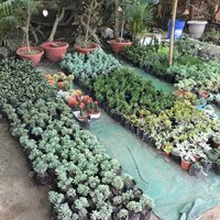 lalkurti-garden