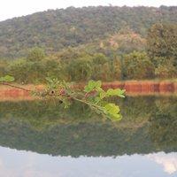 nallamala_forest